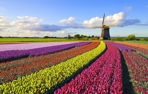 Giá vé máy bay từ Hà Nội đi Hà Lan